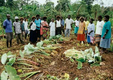 the importance of dalo farming in Food security and as a result of this its agricultural production is extremely low the agronomic potential and importance of taro remains.
